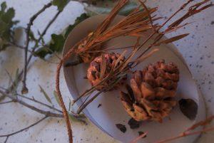 peinture de pommes de pins pour décor d'automne